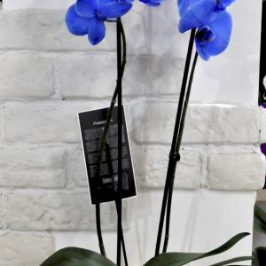 Купить орхидею Минск