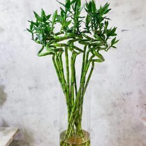 купить бамбук минск