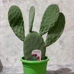 Кактус Opuntia Ficus-Indica