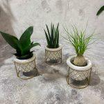 купить растения в минске