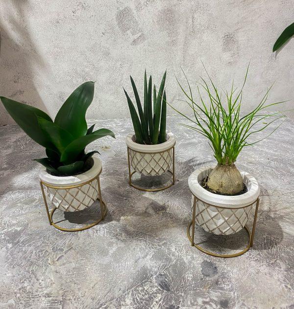 Mini Mix растения